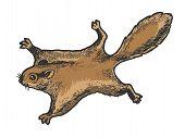 Flying Squirrel Animal Sketch Engraving Vector Illustration. Tee Shirt Apparel Print Design. Scratch poster