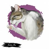 Arabian Or Egyptian Mau Cat Isolated On White Background. Digital Art Illustration Of Hand Drawn Kit poster