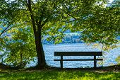 A Bench Under A Tree Overlooking An Idyllic Lake. poster