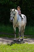 stock photo of bareback  - Little beauty satisfied girl riding bareback by gray beautiful big horse with black bridle - JPG