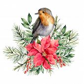 Watercolor Christmas Card With Robin And Floral Decor. Hand Painted Bird, Poinsettia, Berries, Fir A poster