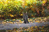 Tabby Cat On The Street On Asphalt An Autumn Day poster