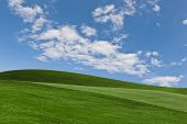 picture of manicured lawn  - A Bright Blue Sky With Green Grass Background - JPG
