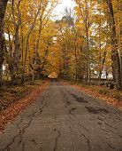 pic of tree lined street  - Deserted tree - JPG