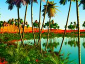 picture of oasis  - Beautiful natural background  - JPG