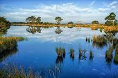 image of swamps  - Cloudy blue morningsky with Reflections on a calm swamp lake Dwingelderveld Nedtherlands - JPG