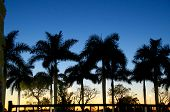 picture of florida-orange  - Palm trees are silhouetted against a darkening sky at sunset in Estero Florida - JPG