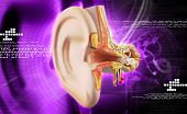 foto of inner ear  - digital illustration of Ear anatomy in colour background - JPG