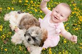 stock photo of buttercup  - Sweet baby girl and puppy in a field of buttercups - JPG