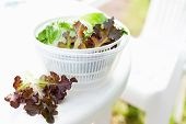 stock photo of iceberg  - Salad spinner with iceberg and red lettuce diet concept
