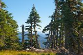 picture of olympic mountains  - Hurricane Ridge in the Olympic National Park - JPG