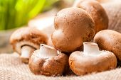 stock photo of agaricus  - Fresh brown whole uncooked Agaricus mushrooms on a hessian sack one of the most cultivated edible mushrooms in the world and a popular ingredient in savory and vegetarian cooking - JPG
