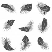 picture of feathers  - Bird feather black calligraphy literature allegory decorative icons set isolated vector illustration - JPG