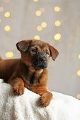 image of christmas puppy  - Cute puppy on Christmas lights background - JPG