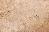 image of dog footprint  - Dog - JPG