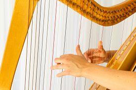 foto of celtic  - Close up hands playing celtic harp - JPG
