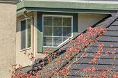 image of red roof  - The roof of the house with nice window with green frame and red blossom tree - JPG