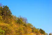 picture of vegetation  - View of Val Rosandra vegetation in Italy - JPG