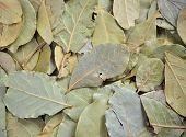 image of bay leaf  - Close - JPG