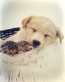 foto of puppy kitten  - kittens and puppy sleeping in a retro style - JPG