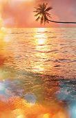 pic of serenity  - Serenity tropical beach - JPG