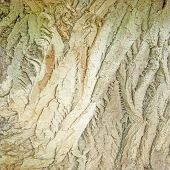 pic of redwood forest  - Texture of the old ill tree in the deep forest - JPG