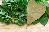 stock photo of bay leaf  - heart shaped bay leaf and other herbs - JPG