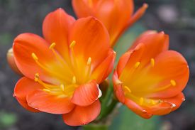 pic of rare flowers  - The Spring time - JPG