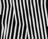 Zebra Thin Stripes Short Fur poster
