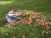 foto of leaf-blower  - a bag full of leaves next to a pile of leaves and a rake.