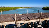 Aged Tropical Wood Bridge In Sian Kaan Tulum