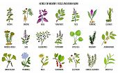 Best Medicinal Herbs For Memory, Focus And Brain Work. Hand Drawn Vector Set Of Medicinal Plants poster