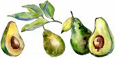 Exotic Green Avocado Wild Fruit In A Watercolor Style Isolated. Full Name Of The Fruit: Avocado. Aqu poster