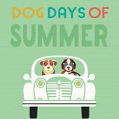 Time For Adventure. Cute Comic Cartoon. Colorful Humor Retro Style. Dogs Go By Retro Car To Beach Fu poster