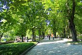 Chernihiv / Ukraine. 06 May 2017: People Have A Rest In City Park With Big Trees And Wide Footpathes poster