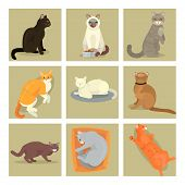 Different Cat Banners Cards Cute Kitty Pet Cartoon Cute Animal Character Set Illustration. Mammal Hu poster