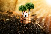 House, Trees And Coins On Nature Background Present Compare The Savings With Tree Planting. Or Savin poster