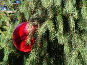 stock photo of christmas wreaths  - a red christmas ball nestled in a Christmas tree - JPG