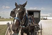 foto of mennonite  - In a clash of cultures an Amish horse and buggy are parked on a gravel lot beside a modern gas station - JPG
