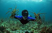 Young Man Free Diving And Catching Lobster