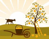 stock photo of hand-barrow  - vector apple tree and hand barrow with basket of apples - JPG