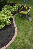 Mulching Around Hostas
