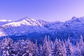 Surreal Mountain Landscape, Purple Sky, Mountains And Christmas Trees Covered With Snow, Creative Co poster