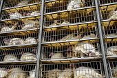 Low Angle Of Live White Turkeys In Transportation Truck Cages, The Process Of Livestock And Transpor poster