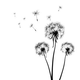 stock photo of dandelion seed  - silhouettes of three dandelions in the wind - JPG