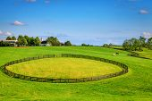 pic of bluegrass  - Horse farm with black fences - JPG