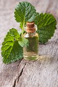picture of borage  - Melissa extract in glass bottle with fresh leaves on the table closeup - JPG