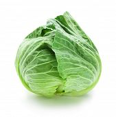 picture of water cabbage  - Fresh harvested cabbage with slight water drops for freshness - JPG