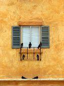 Birds On A Windowsill-Portrait Style poster