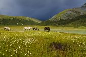 stock photo of bronco  - Beautiful mountain landscape with grazing horses at the lake - JPG